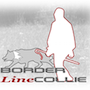 Borderlinecollie